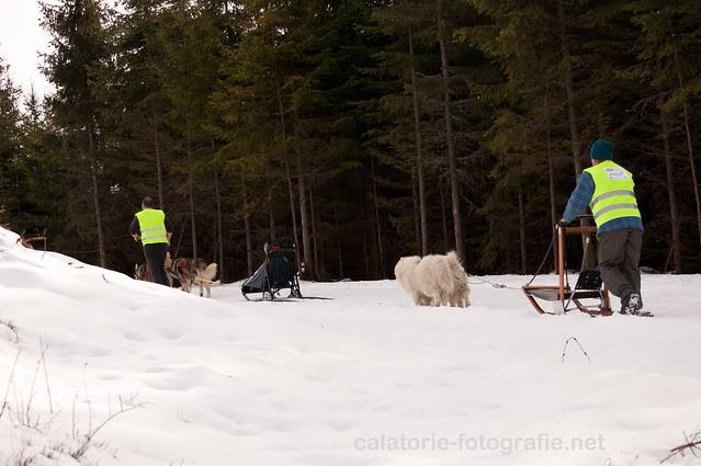 Cupa Beliș 2014 - primul concurs de atelaje canine desfășurat vreodată în județul Cluj  12287492413_ed33ed1264_z