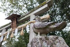 三宅八幡宮 狛鳩