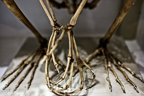 animal skeleton appendages by joeeisner