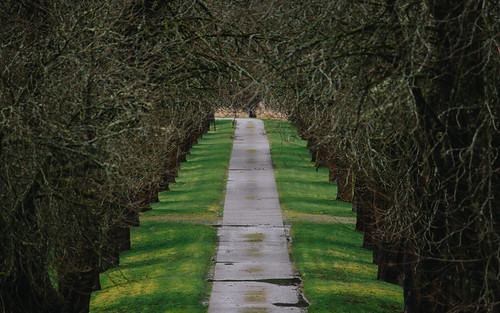 driveway entrance trees carnation pacificnorthwest canon pnw greengrass mysterious branches scenery depthoffield dof road canonef100400mmf4556lisusm canoneos5dmarkiii farms carnationfarmsroadtohorseshoelake hawthornetreelimbs washington johnwestrock