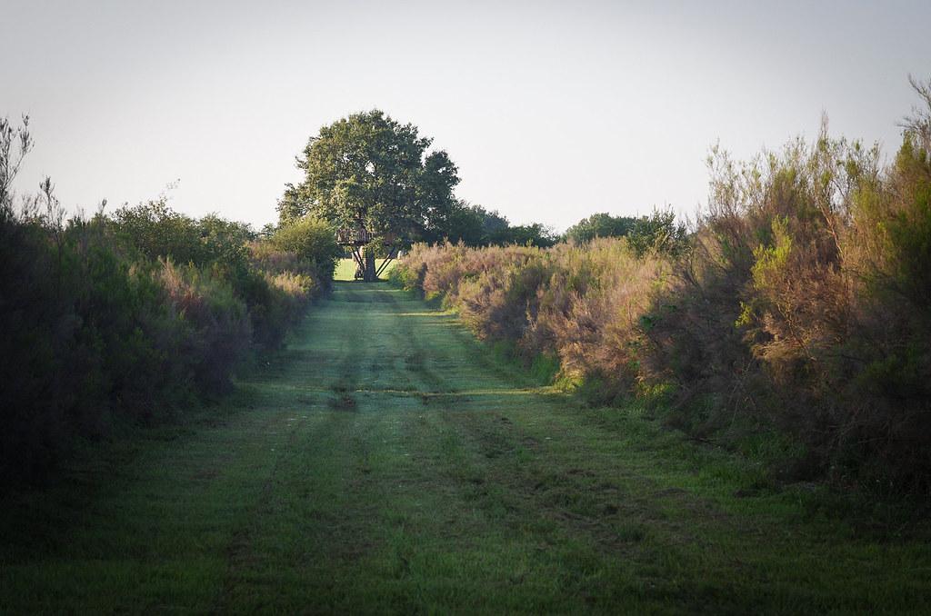 Dormir dans les arbres - une cabane perdue au bout du chemin