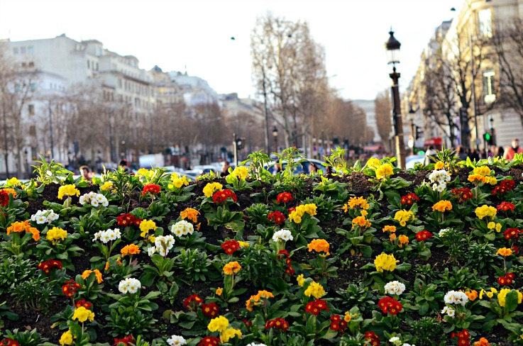 DSC_6558 Spring violets Paris