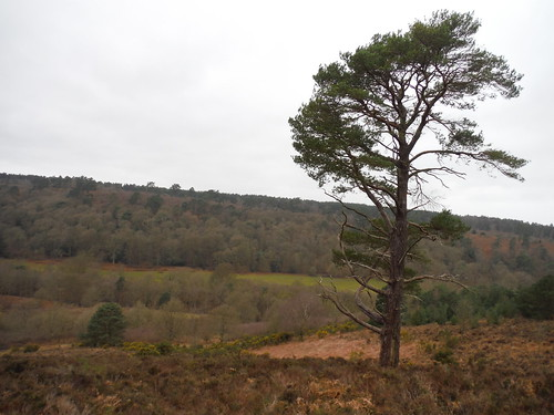 Highcomb Bottom, View from Viewpoint