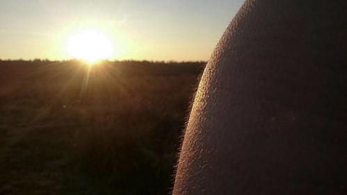 #mamifer #reflex #fur #sunset #findujour #nagehivernalesauvage #skin