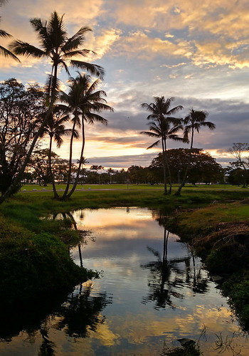 hawaii android cameraphone sunrise reflections waterreflections reflection goldenhour palmtrees