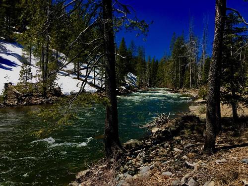 sierras springrunoff truckee river fishing fly alpine snow blueribbon rainbow brown trout