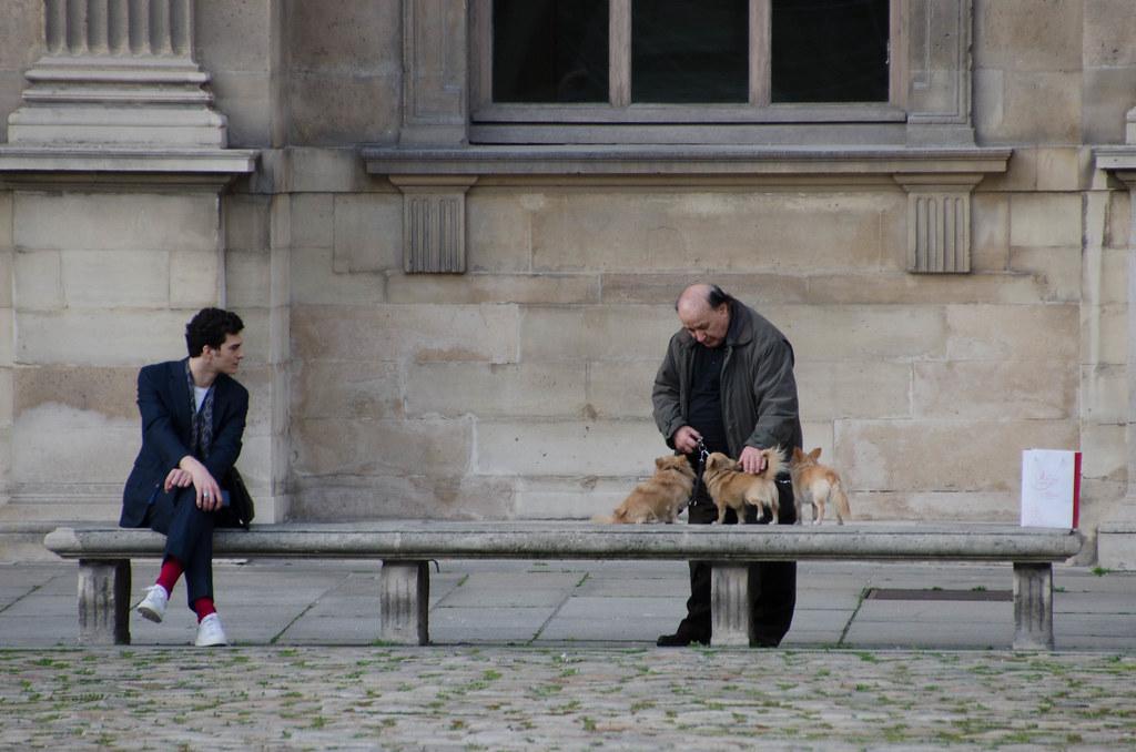 Intéret pour les chiens miniatures - Interest for miniature dogs