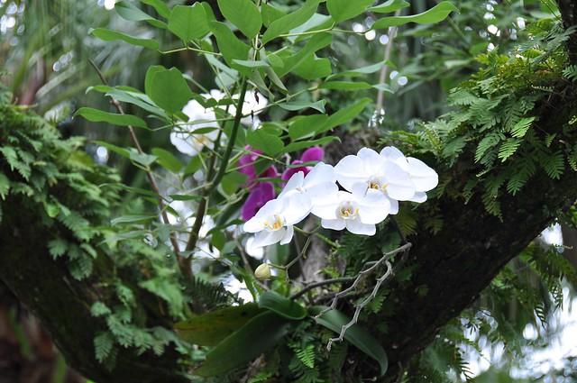 Orchids - Wild?