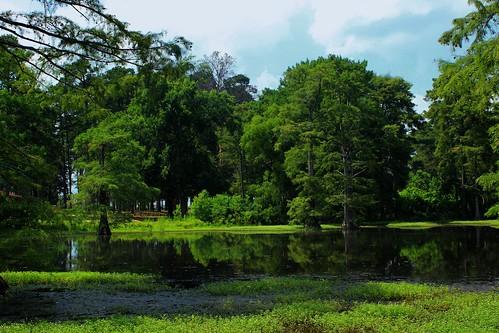 crosslake shreveport louisiana marsh creek bayou lake cypress swamp wetlands