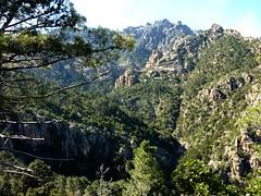 Sur la crête de Quarcitellu (1ère branche) : vue vers Punta di Quercitella et l'amont du Finicione