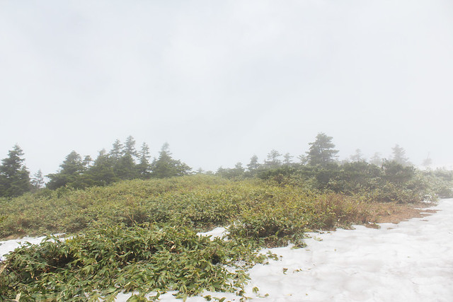 会津駒ヶ岳_57