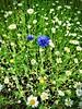 Flowers at York Uni