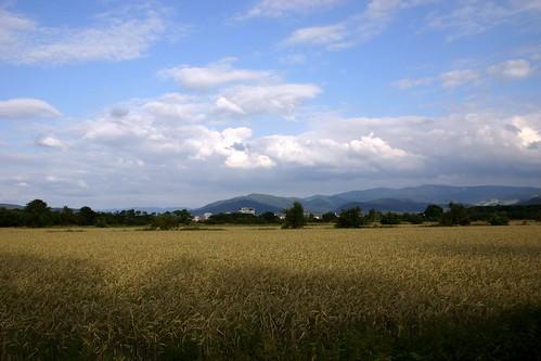Rieselfeld landscape XI