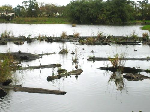 貯木池轉為生態水池及溼地