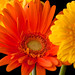3rd Place - Emily Harrington - Happy Flower
