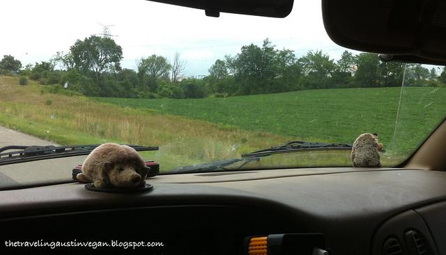 Hedgehog Tiff