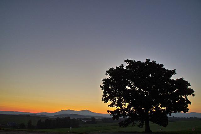 夜明けのセブンスターの木