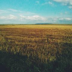 Fields of gold!
