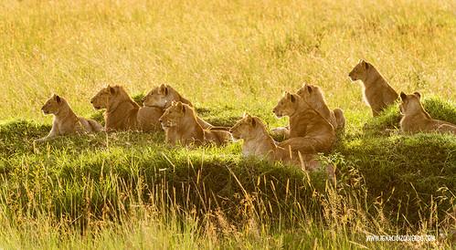 Kenia - Masai Mara 54