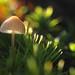 Mushroom magic! by Pog's pix
