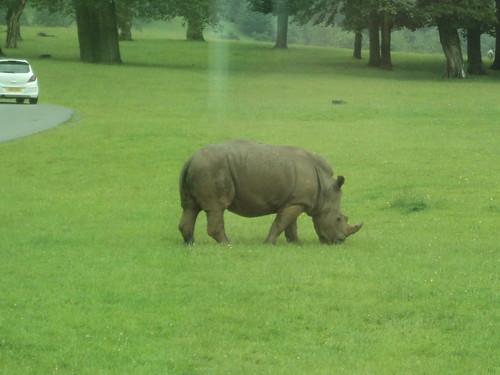 UWE Staff Social trip to Longleat Safari Park - July 2012