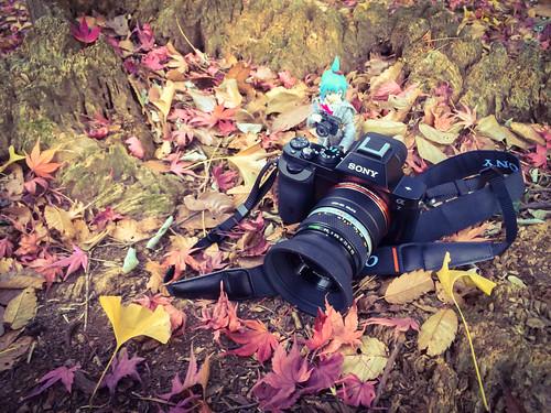 カメラロール-5561