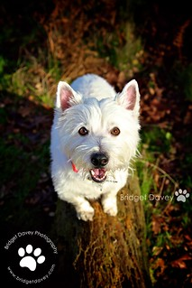 Sid | Pet Photography Leighton Buzzard, Bedfordshire