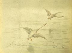 """British Library digitised image from page 382 of """"Terres lointaines. Voyage autour du monde. Ouvrage illustré de 17 planches, etc"""""""
