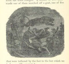 Image taken from page 66 of '[African Hunting from Natal to the Zambesi including Lake Ngami, the Kalahari Desert, &c. from 1852 to 1860 ... With illustrations [including a portrait] by James Wolf and J. B. Zwecker.]'