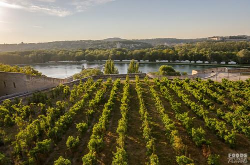 Avignon River View