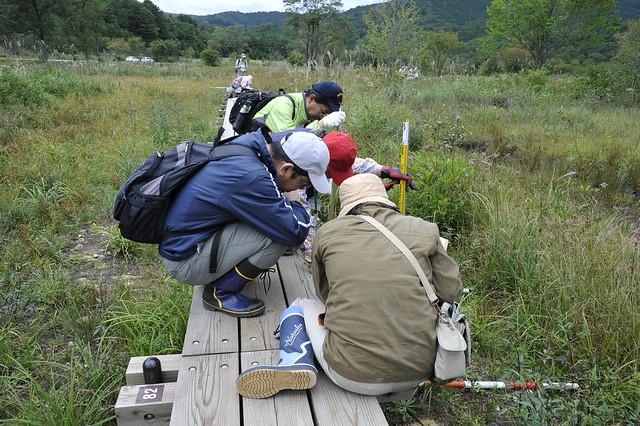 木道の上から植生高や被度・郡度を測る.