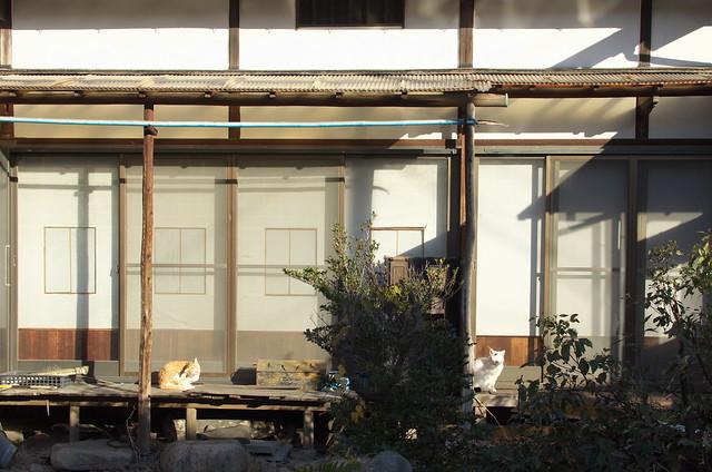 東京路地裏散歩 縁側のネコ 2014年1月6日