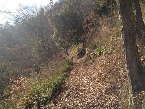 文殊の森 どんぐりの小道