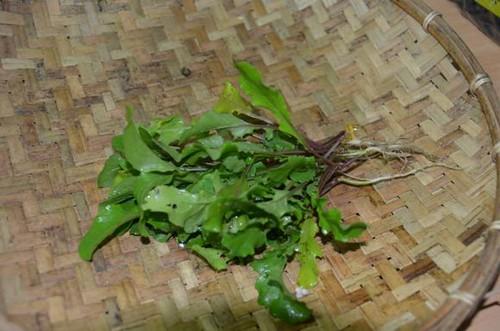 有機蔬菜。(黃淑玲攝)