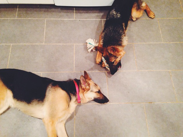 Kitchen pups