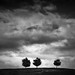 Three Trees after the Storm by StefanB