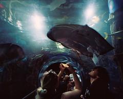 Melbourne Aquarium i