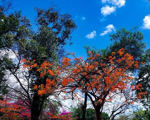 Flores por onde andei... #meuolharemfotos #edjss #ednelsonfotografia #fotografia #photography #natureza #flores #flowers #alagoas #ceu #sky #nuvens #clouds #weather #flowersphotography #flowerphotography #foto  #photo #naturephotography #naturephoto #mace