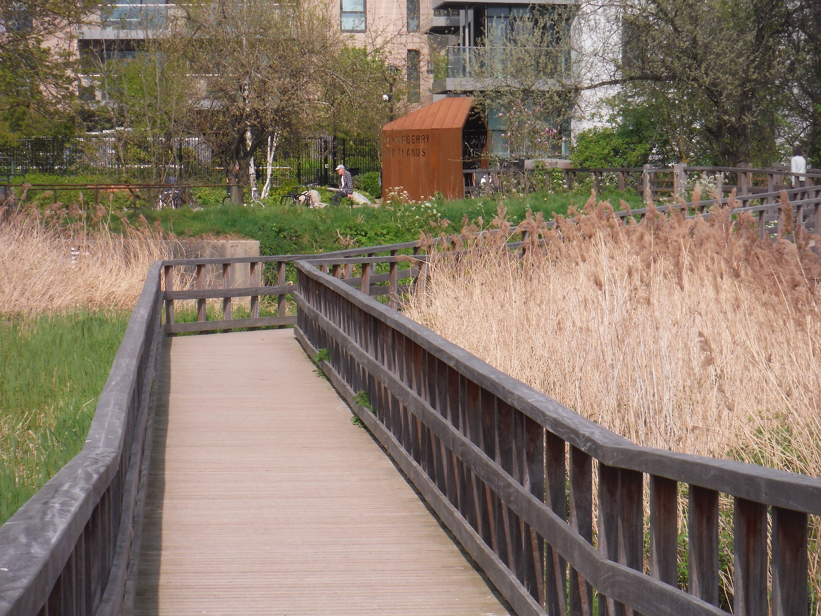 Boardwalk through Reed Beds (II), Woodberry Wetlands SWC Short Walk 26 - Woodberry Wetlands (Stoke Newington Reservoirs)