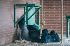 twycross zoo  -3063