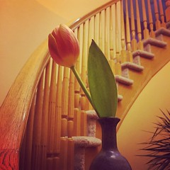 Tulip 🌷 #tulip #flower #stairs