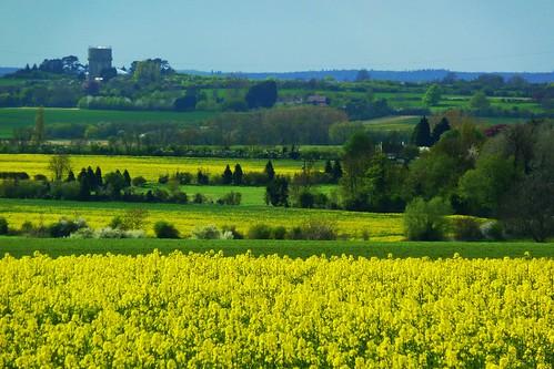 yellow watertower fields hertfordshire brassica herts oilseedrape newnham