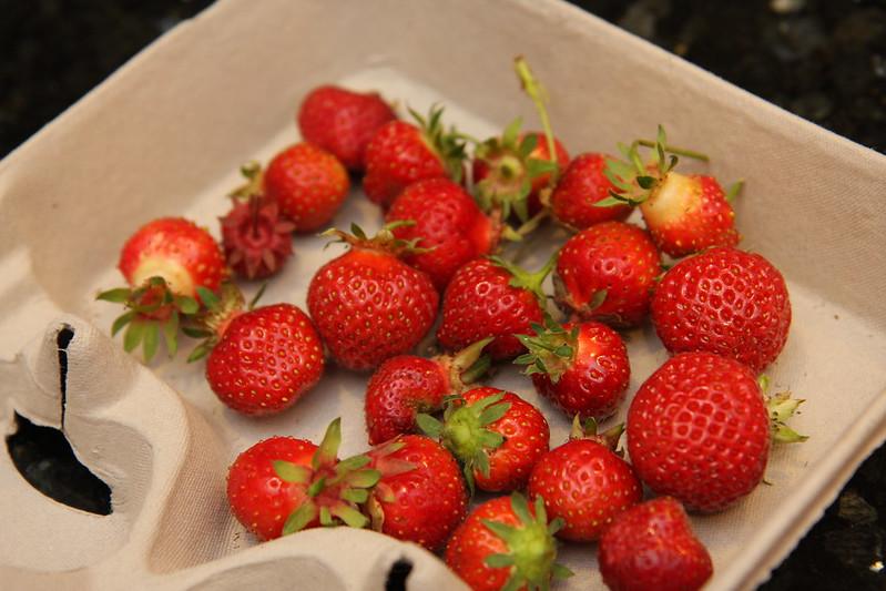 strawbeerries
