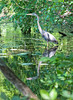 Heron in Fairyland