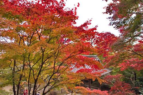【写真】紅葉 : 勝持寺
