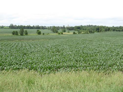 Wisconsin Landscape, Door Peninsula