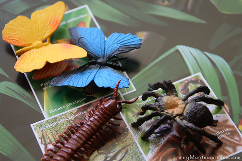 Butterflies and Venomous Creatures on Safari Ltd. Rainforest Poster