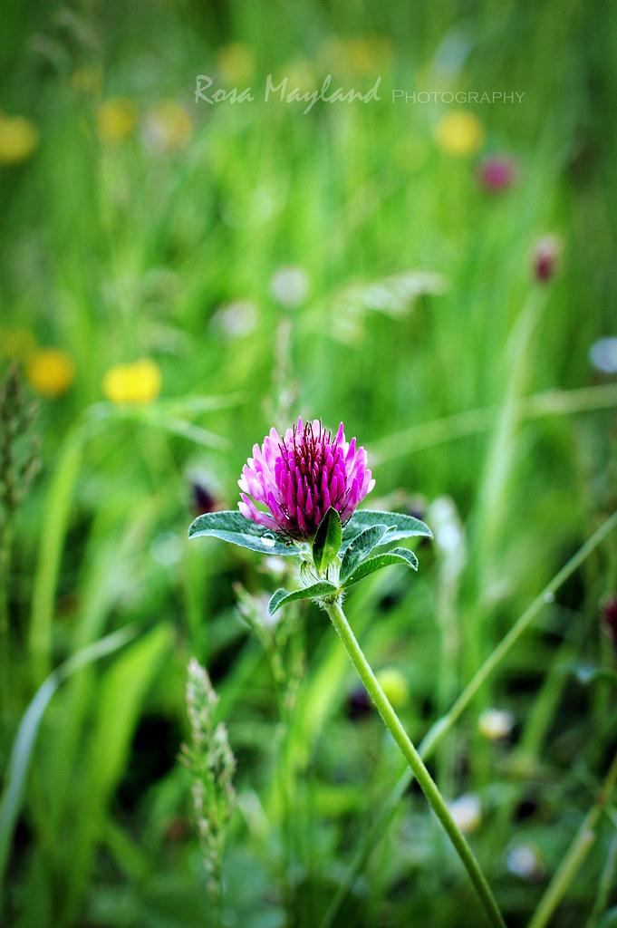 Flower 1 5 bis