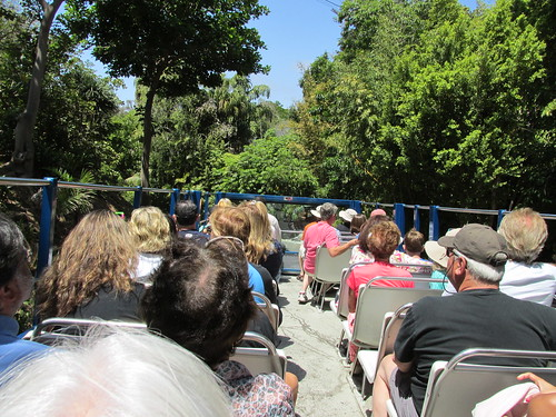 Riding the open top deck of a double deck bus.  The San Diego Zoo.  San Diego California.  June 2013. by Eddie from Chicago
