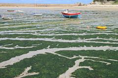 Sailing on seaweed